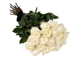 25 белых роз (40 см)