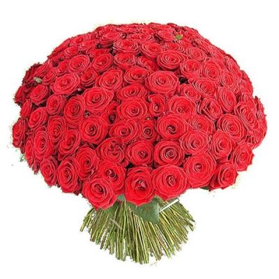 Букет 101 красная роза (50см)