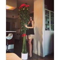 Высокие розы 200 см 25 шт