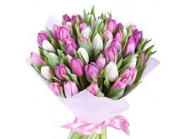 Букет 51 белого и сиреневого тюльпана