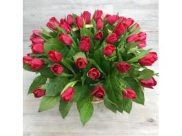 Корзина из 51 красного тюльпана