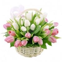 Композиция из 51 тюльпана в корзине