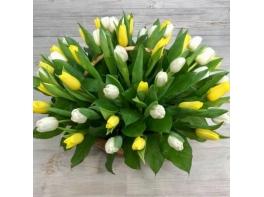 Корзина из 49 белых и желтых тюльпанов