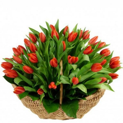 Корзина из 101 красного тюльпана