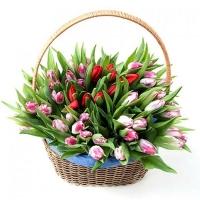 Красные и розовые тюльпаны в корзине 101 шт.