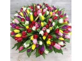 Корзина из 201 разноцветного тюльпана
