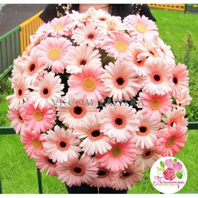 Букет 51 гербера розовая