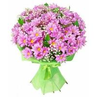 Хризантема кустовая «Стильная»