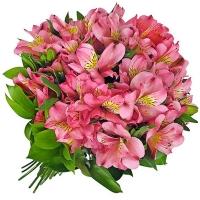 Розовые альстромерии «Розовый фламинго»