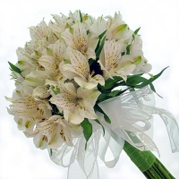 Букет из белых альстромерий «Нежный цвет»