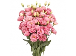 Букет из 15 розовых эустом